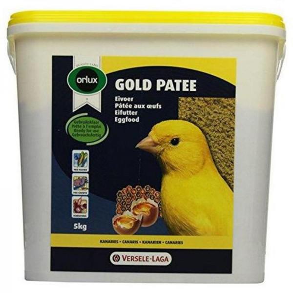 Gold Patee Kanarienvogel